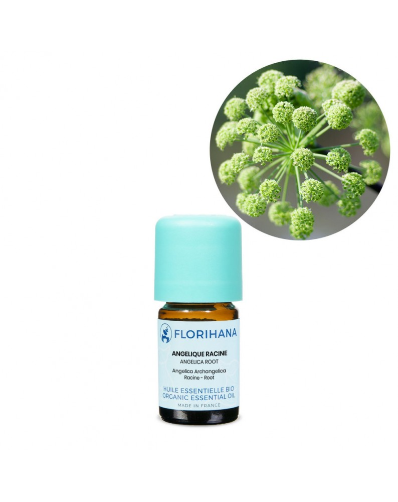 Angelica Root Essential Oil BIO (Angelica Archangelica) - FLE004