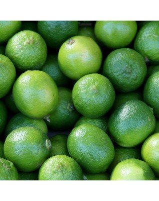 Lime Essential Oil BIO (Citrus aurentifolia) - FLE019